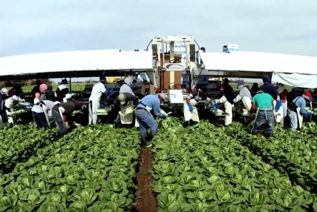 lavoro energie risorse cibo spreco tempo consumo consapevole cultura antropologia