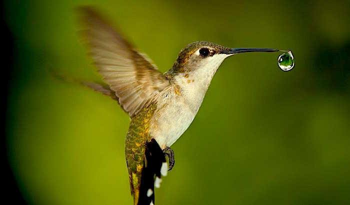 colibrì ognuno faccia la sua parte per salvare il mondo cultura africa antropologia storie dal mondo favole