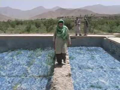 postcards from tora bora afghanistan film documentario