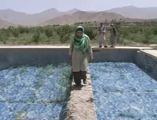 Ricordi di Tora Bora in un Afghanistan dimenticato