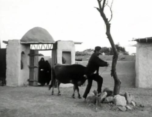 """""""La Mucca"""": un'immagine dell'Iran rurale all'epoca dello Shah"""