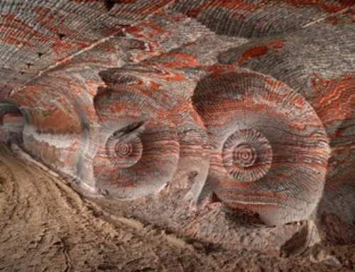 Antropocene, l'era modellata dagli esseri umani